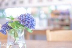 今年、最初で最後の紫陽花
