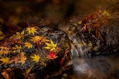 名残の秋✨