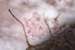 微睡の春♪