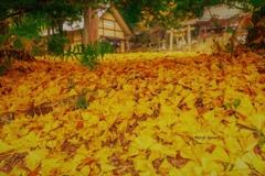 晩秋のどぶろく神社✨