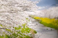 Spring color♬