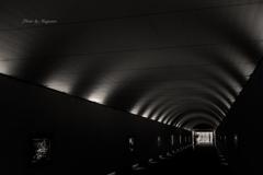 トンネルギャラリー♪
