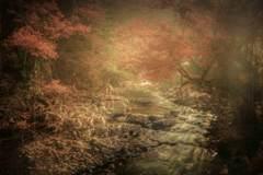 渓流の晩秋✨