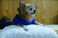 うちのアイドル犬