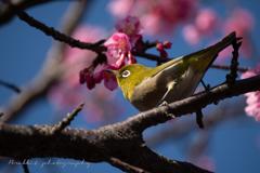 まだ早いかなと思いつつ春の兆しに逢いに行く