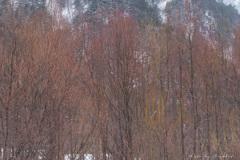 春を待つ木々の色彩#1