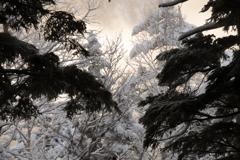 シラビソ 朝の雪化粧