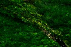 小川の揺らめき、輝き