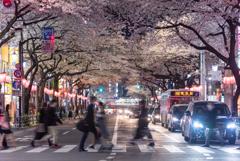 桜 Main Street