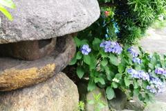 灯籠と紫陽花