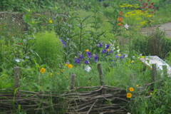 秋の七草の花壇