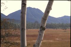 白樺と山(2000年10月8日)