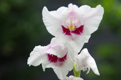 ハーブ園の花