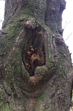 樹木のうろ