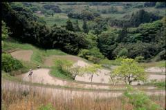 大山千枚田(2000年5月)