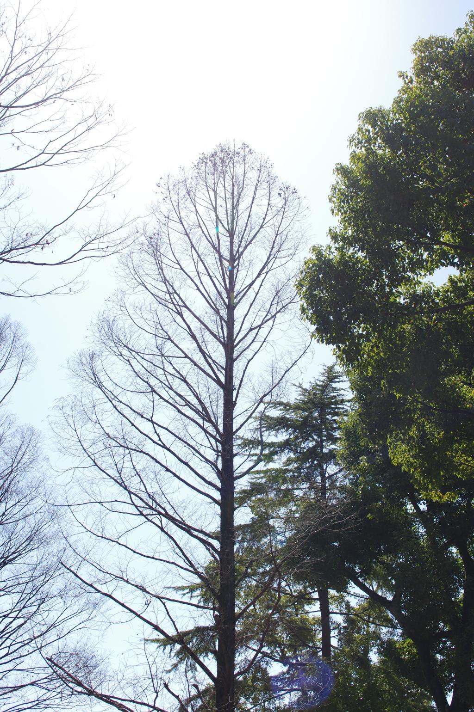 落葉樹と常緑樹