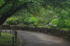 小道の風景