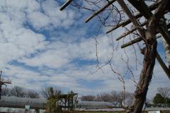 ブドウ棚と空