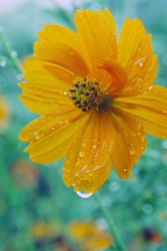 秋雨に濡れて