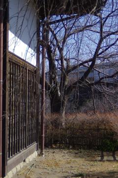 長屋門脇の枝垂桜とソメイヨシノの冬枯れ