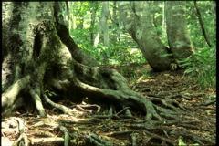木の根 2