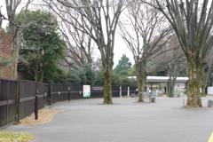 一般道と公園