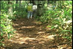 森のおくえ (2002年8月4日)