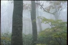 霧に包まれて (2000年) 4