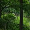 池のほとりに咲く