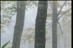 霧に包まれて (2000年)