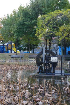 蓮池の水車 1 2015年11月16日