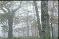 霧に包まれて (2000年) 2