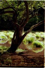 湖の木と草