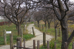 梅の木がある小道