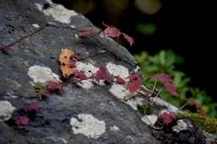 岩の上の秋