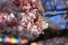 西新井大師にて春の匂い