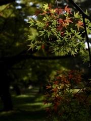 京都御所の紅葉 1