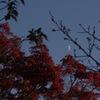 月と桜と紅葉と