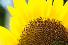 太陽のハート