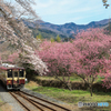 桃と桜のトンネル!