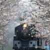 桜の花を吹き飛ばせ!!!