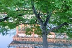 平等院の池