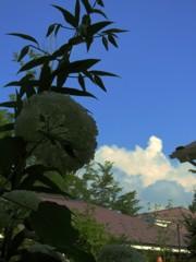 庭から見た夏空