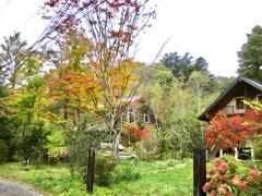 近所の別荘の紅葉