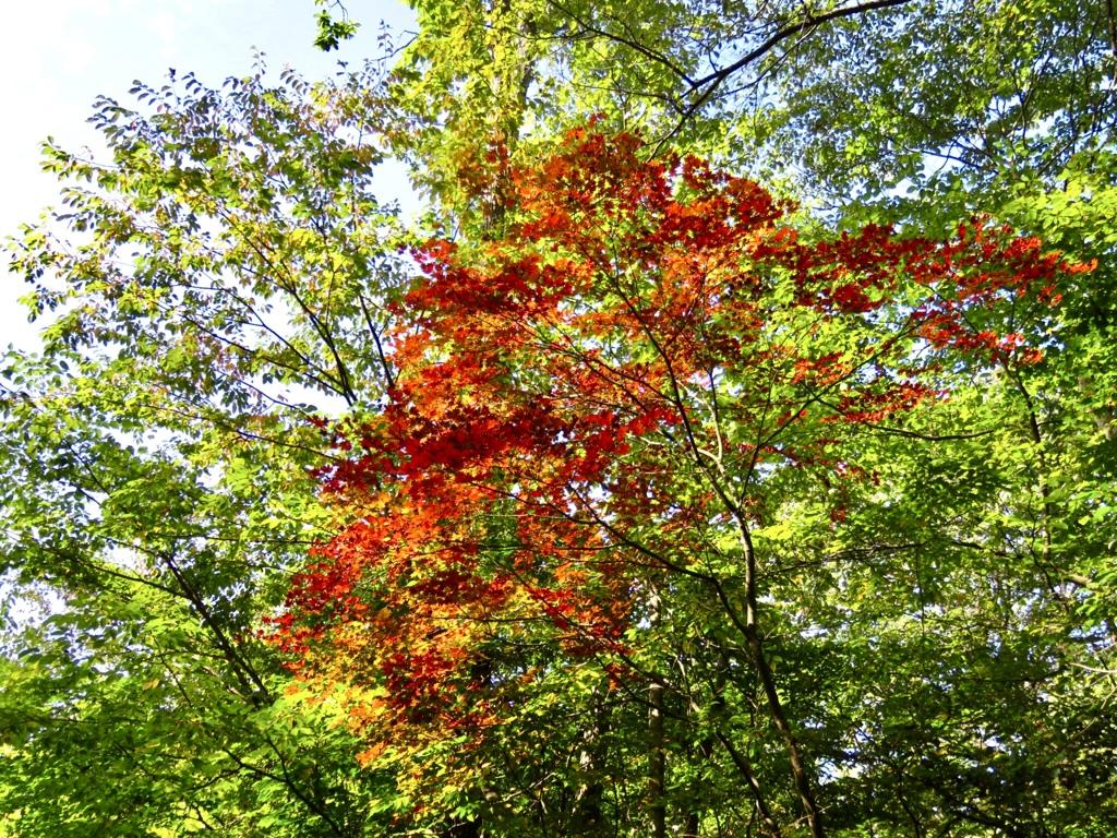 散歩で見かけた紅葉5
