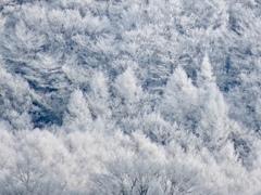 離山の霧氷2