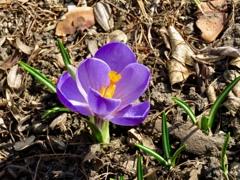 庭の二番花