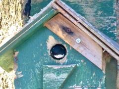 巣作り開始3
