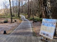 ケラ池へ向かう遊歩道
