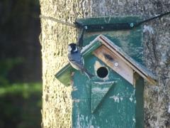 巣作り開始5
